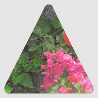 Lanzarote Lava Rock with Flowers Triangle Sticker