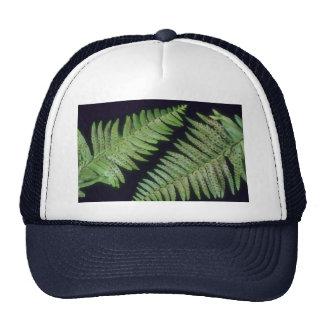 Lanzas de la planta gorra