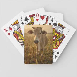 Laos, Vang Vieng. Cow at sunrise Playing Cards