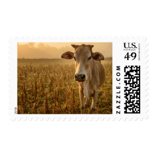 Laos, Vang Vieng. Cow at sunrise Stamp