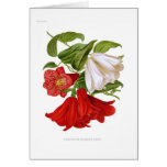 Lapageria rosea.(Chilean bellflower) Greeting Card
