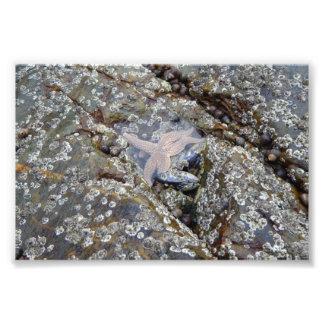 Lapas y una estrella de mar fotografías