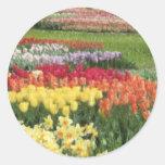 Lápices de los jacintos de los tulipanes de los na pegatina