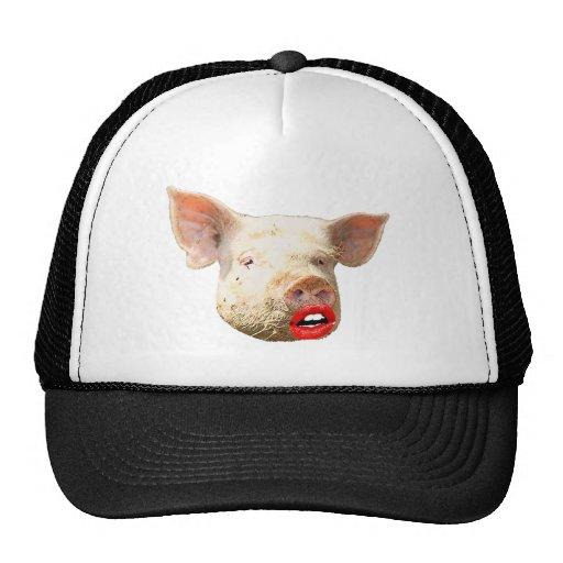 Lápiz labial en un cerdo gorras de camionero