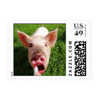 Lápiz labial en un cerdo pequeño sellos