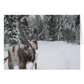 Lapland reindeer Christmas Card holidays card