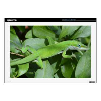 Laptop Skins - Baby Lizard