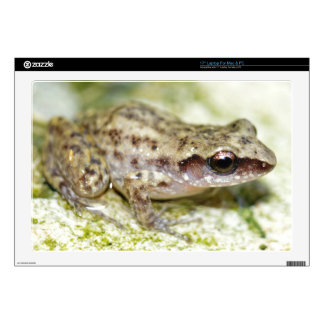 Laptop Skins - Bright Colored Baby Frog No.1