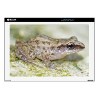 Laptop Skins - Bright Colored Baby Frog No.2