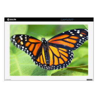 Laptop Skins - Butterfly close up 4