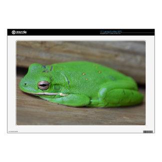 Laptop Skins - Green Tree Frog