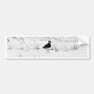 Lapwing Animal Bumper Sticker
