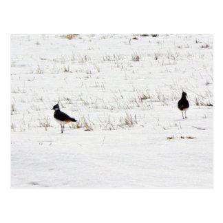 Lapwings Postcard