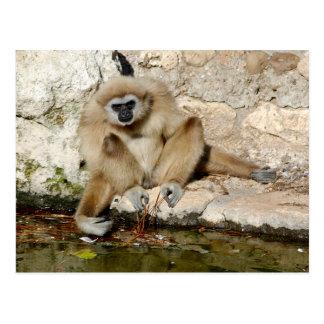 Lar gibbon near pond postcard