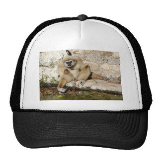 Lar gibbon near pond trucker hat