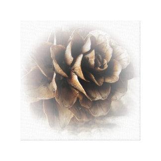 Larch Cone Canvas Print