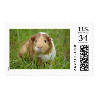 "Large, 2.5"" x 1.5"", $0.34 (Post Card) Postage"
