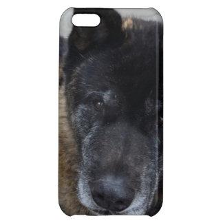 Large Akita iPhone 5C Cases