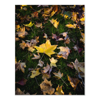 "Large Autumn Leaf on Grass 4.25"" x 5.5"" Card"