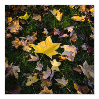 "Large Autumn Leaf on Grass - 5.25"" Card"