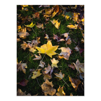 "Large Autumn Leaf on Grass - 6.5"" x 8.75"" Card"