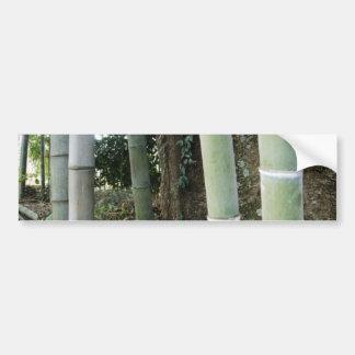 Large Bamboo. Bumper Sticker