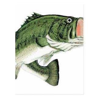 Large Big Mouth Bass Postcard
