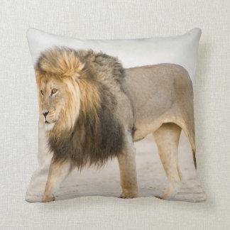 Large Black Maned Lion (Panthera Leo) Walks Pillow