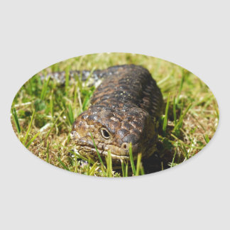 Large_Blue_Tongue_Lizard,_ Oval Sticker