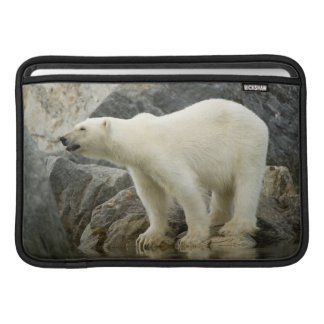 Large boar along a rocky coast in summer sleeve for MacBook air