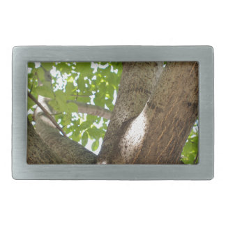Large branches walnut textured bark in the foregro belt buckle