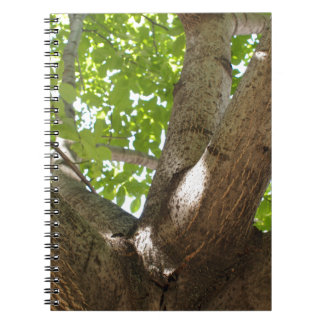 Large branches walnut textured bark in the foregro spiral notebook