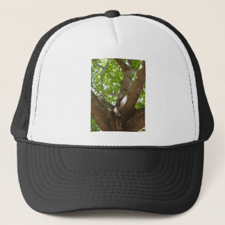 Large branches walnut textured bark in the foregro trucker hat