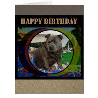 Large Card   Staffordshire Bull Terrier Birthday