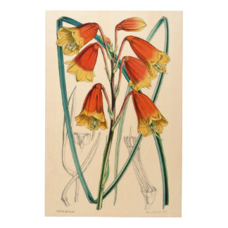 Large Christmas Bell Flowers - Wood Canvas