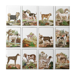 Large Dogs Collection (3x4) Tile