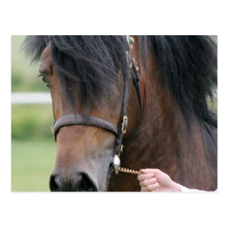 Large Draft Horse Postcard