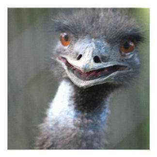 Large Emu Invitations