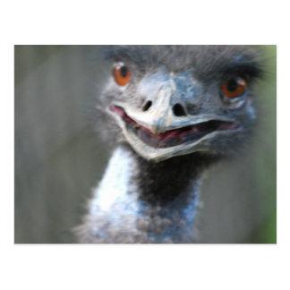 Large Emu  Postcard