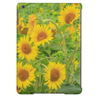 Large field of sunflowers near Moses Lake, WA 2 iPad Air Cases