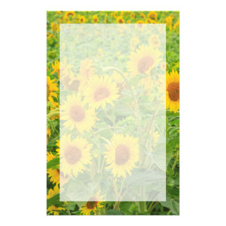 Large field of sunflowers near Moses Lake, WA 2 Stationery