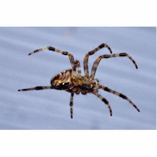 Large garden spider building the web photo statuette