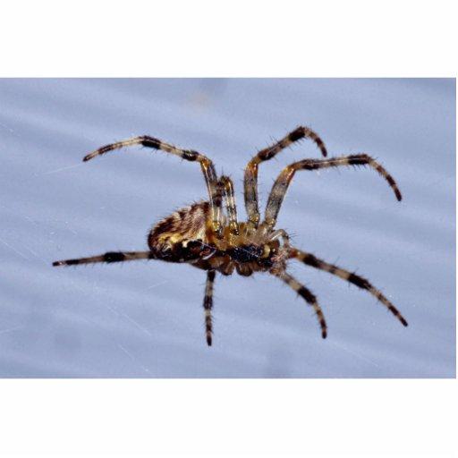 Large garden spider building the web photo sculptures