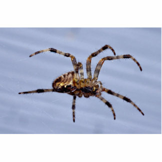 Large garden spider building the web statuette