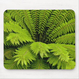 Large Green Fern Mouse Pad