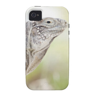 Large green Iguana basking in the sun in the iPhone 4 Cases