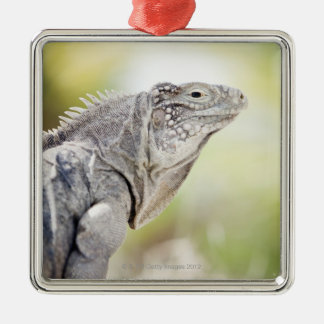 Large green Iguana basking in the sun in the Metal Ornament