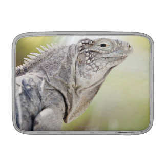 Large green Iguana basking in the sun in the Sleeves For MacBook Air