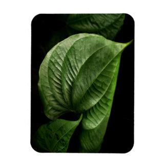 Large Green Leaf Vinyl Magnet