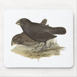 Large Ground Finch Mouse Pad